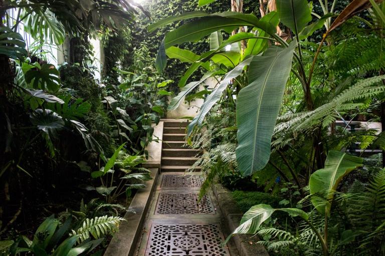 jardin-botanico-madrid.jpg